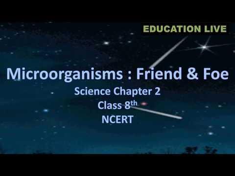 Microorganisms Friend Foe Science Chapter Class 8th NCERT CBSE Syllabus