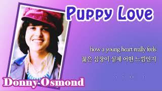 Puppy Love / Donny Osmond (with Lyrics & 가사 해석)
