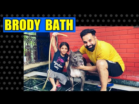 Brodys Bath Vlog Most Demanding Video | Funny Dog | Harpreet SDC
