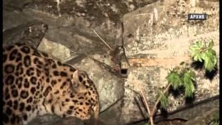 В городе состоялся флешмоб в защиту дальневосточного леопарда