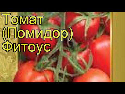 Томат обыкновенный Фитоус (Fitous). Краткий обзор, описание характеристик, где купить семена