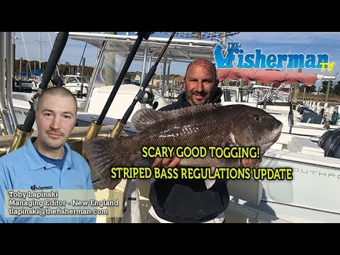 STRIPED BASS REGULATIONS UPDATE And October 31, 2019 New England Fishing Report With Toby Lapinski
