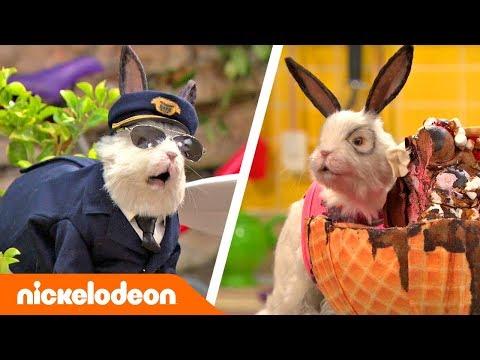 Грозная семейка | Лучшие моменты с Доктором Колоссо, часть вторая 🐇 | Nickelodeon Россия