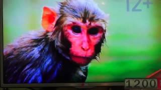 Воспроизведение видео на EKT 4404(http://sme.su Спутниковое и цифровое телевидение в Приморском крае!, 2016-07-15T03:57:57.000Z)