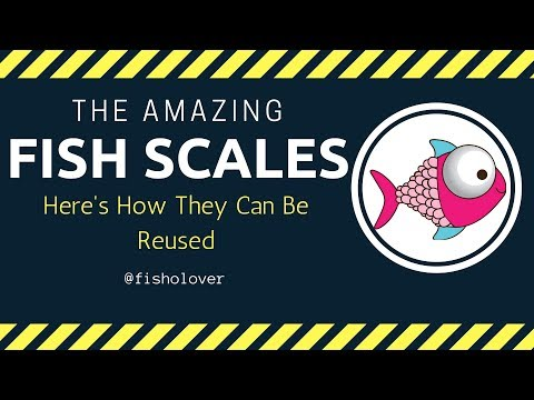 The Amazing Fish Scales: Here's How They Can Be Reused