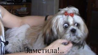 Уход за собакой - Как приучить щенка к грумингу