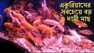 Aquarium Fish Price In Dhaka