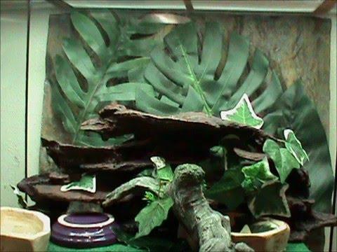 Follow up to white s tree frog exo terra setup layouts youtube