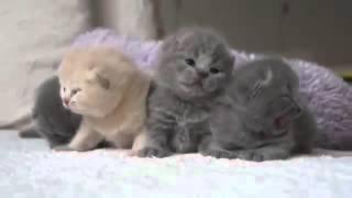 Котята очень мило мяукают и ищет маму !!)