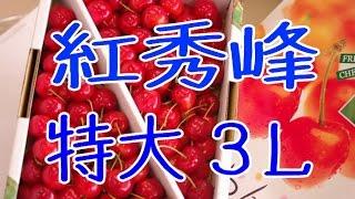特大3Lの紅秀峰さくらんぼ販売。お中元果物ギフト通販 Benisyuho Japanese cherry