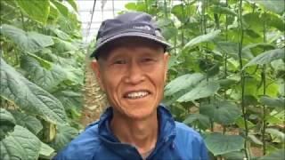 [농사농담/오이농사] 27년 차 이한준 농군의 오이 농…