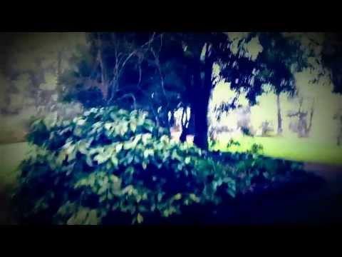 Garden Memories (take me back)