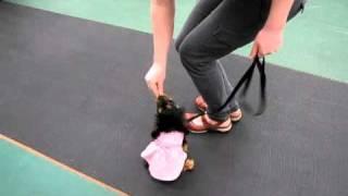 Puppy Training; Walking On Leash