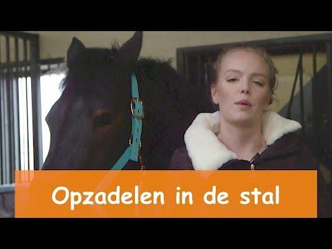 Opzadelen in de stal & toffe Winactie | PaardenpraatTV