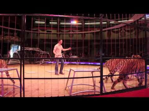 Alexander Lacey @ Circus Krone: öffentliche kommentierte Raubtierproben am 6.2.2010 in München