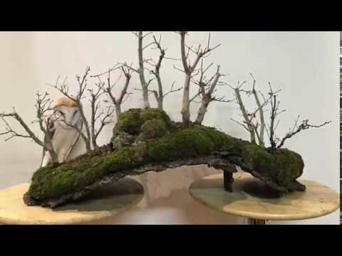 Bosque De Acer Palmatum Deshojo Youtube