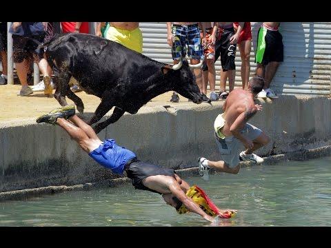 Смешные коты в воде! Подборка 2014