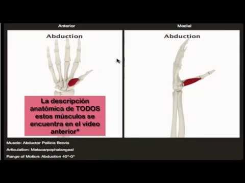 Movimientos de los músculos de la mano - YouTube