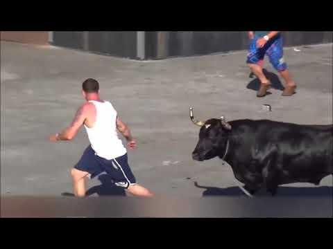 Bull Vs People,Demolishing People Compilation