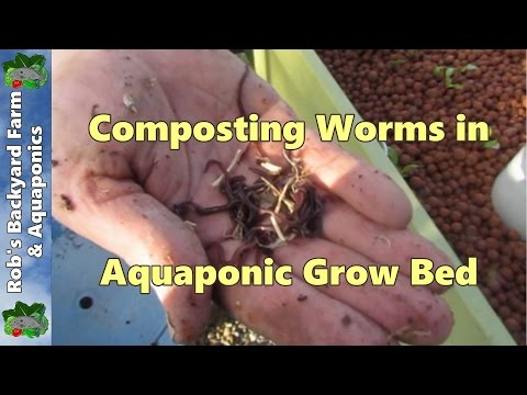 Composting worms in Aquaponic grow bed..
