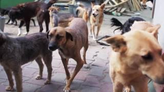 """Помощь приюту для бездомных животных """"Ковчег"""", Одесса"""