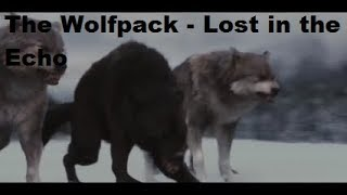 The Wolfpack  - Lost in the Echo