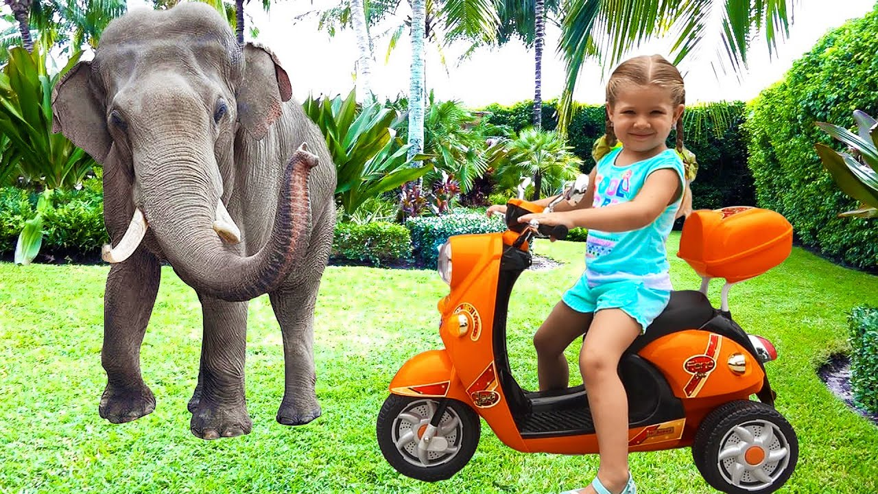 Diana alimenta os animais no zoológico