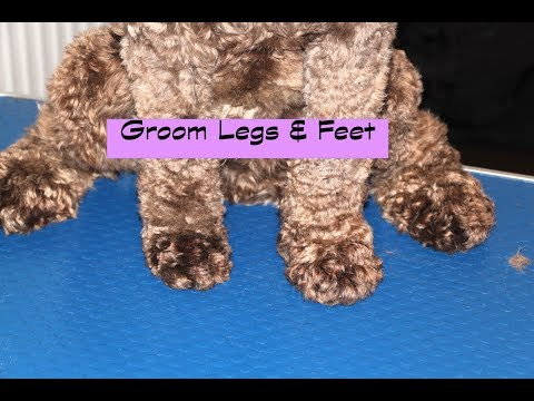 How to groom a Labradoodle/Cockapoo - Legs & Feet