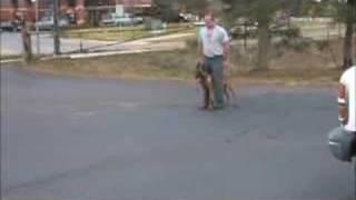 Sit Means Sit Dog Training  Denver, Colorado