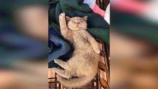 Смешные кошки 2019 Новые приколы с котами до слёз, смешные коты приколы 2019 funny cats #77