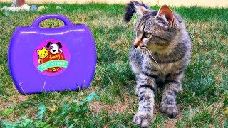 Lindo Gatito   Pet Shop Play with the cat and Sing Along   Cat playing Time  