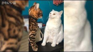 かわいい猫 - 壮絶な猫のケンカ - おもしろ猫動画: https://youtu.be/Qe...