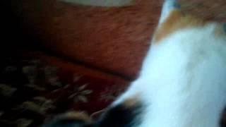 Моя кошка похожа на кота сливки шоу куки!!!