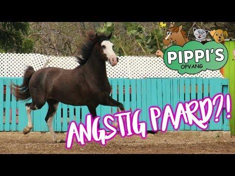 Aankomst Curaçao! Verwaarloosde hond & angstig paard? | felinehoi