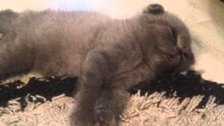 Котенок болеет (