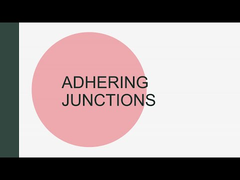 CELL JUNCTIONS: Part 2 - Adhering Junctions