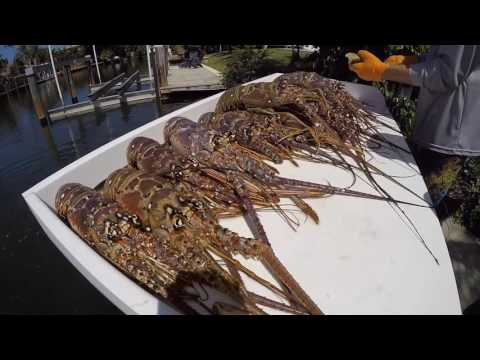 FASTEST WAY TO CLEAN A LOBSTER | D Vein Company