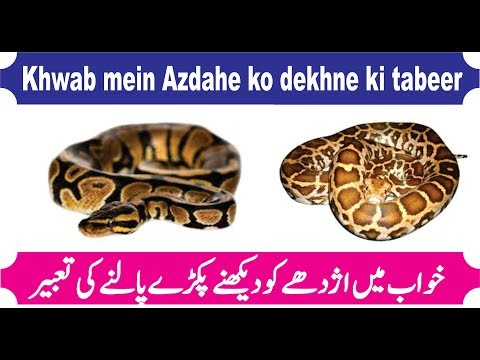 interpretation of Anaconda in dream  khwab mein azdaha dekhne ki tabeer