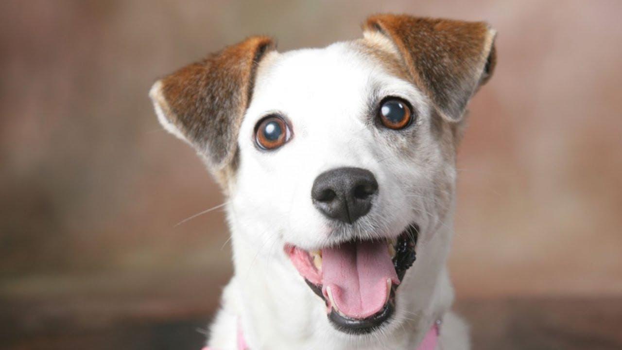 Top 10 Curiosidades Sobre Cachorros