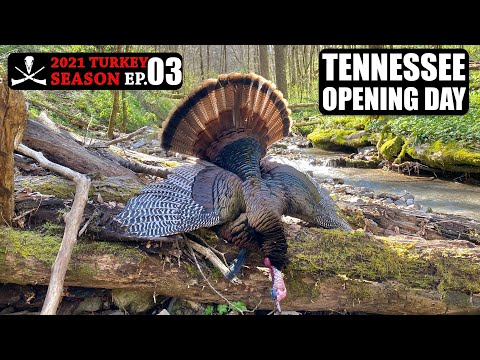 Public Land Limb Hanger on Opening Day! Hill Country Hunting – 2021 Turkey Season Ep. 03