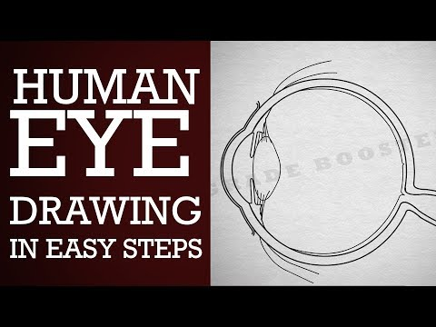 How to draw human eye in easy steps : Human Eye&Colourful world : 10th Physics :NCERT: CBSE Syllabus