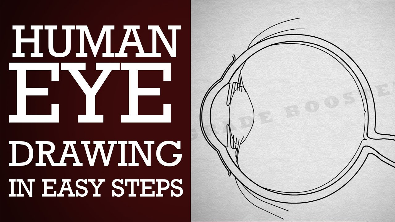how to draw human eye diagram step by step 10th physics science how to draw human [ 1280 x 720 Pixel ]