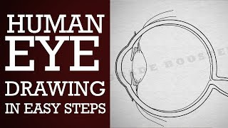 How to draw human #eye in easy steps |10th |Physics | science | CBSE syllabus | NCERT class 10