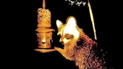 """Brome """"Squirrel Solution 200"""" & """"Squirrel Buster Plus"""" Bird Feeders vs The Ravenous Raccoon"""