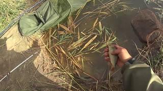 Ловля рыбы на фидер ( Дневник рыболова )