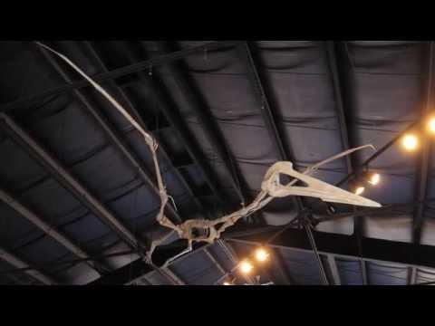 Quetzalcoatlus northropi - Triebold Paleontology