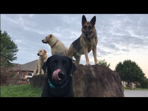 My Rock Group | Odin & The Lab Pack