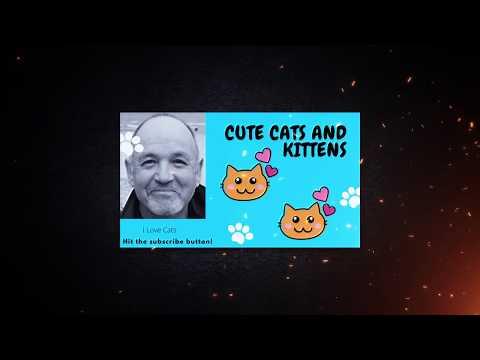 cat-cuteness-overload-cutest-cats-compilation-2020