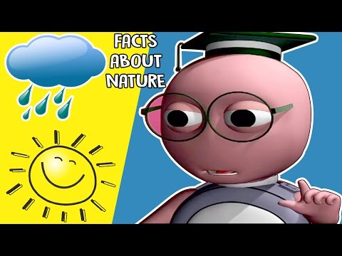 Interesting Facts About Nature | Kids Learning Videos | KidsVideoShow