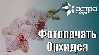 Фотопечать на натяжном потолке орхидея // Астра Модерн